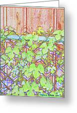 Vines On A Fence Greeting Card