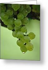 Vineyard Grapes I Greeting Card