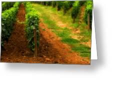 Vineyard In Burgundy France Greeting Card