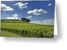 Vineyard Of Saint-emilion. Gironde. Aquitaine. France Greeting Card