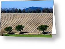 Vineyard On A Hill With Trees Greeting Card