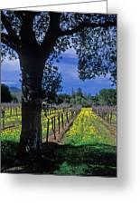 Vineyard View Greeting Card by Kathy Yates
