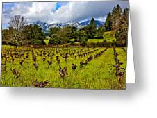 Vineyards And Mt St. Helena Greeting Card by Garry Gay