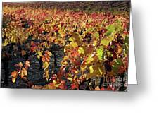 Vineyards At Fall Greeting Card