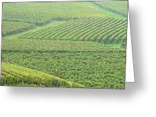 Vineyards Near St Emilion In The Mist Greeting Card