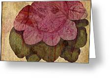 Vintage Cabbage Greeting Card by Bonnie Bruno