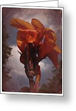 Vintage Canna Lily Greeting Card by Richard Cummings