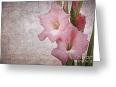 Vintage Gladioli Greeting Card