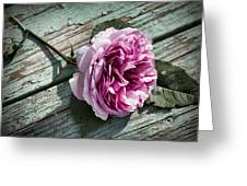 Vintage Pink English Rose And Peeling Paint Greeting Card