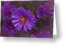 Vintage Purple  Greeting Card by Richard Cummings