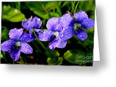 Violet And Raindrops Greeting Card