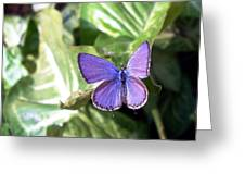 Violet Butterfly Greeting Card