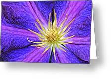 Violet Clematis Greeting Card