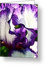 Violet Edges Greeting Card