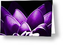 Violet Lotus Greeting Card