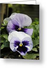 Violet Pansies Flower Greeting Card