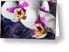 Violet Spots Greeting Card by Diana Shively