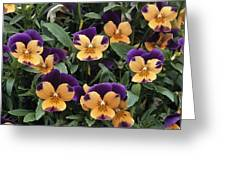 Violets Greeting Card by Archie Young