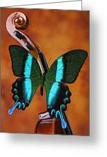 Violin With Green Black Butterfly Greeting Card