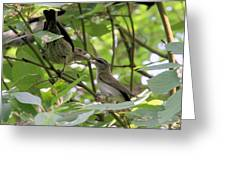 Vireo And Cowbird Greeting Card
