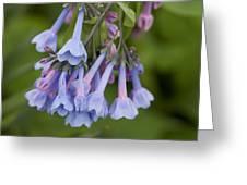 Virginia Blue Bells Greeting Card
