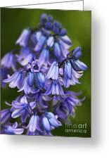Virginia Bluebells Greeting Card