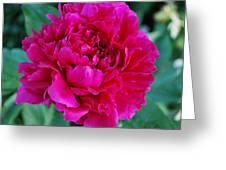 Virginia Tech Peace Garden 3 Greeting Card