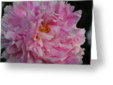 Virginia Tech Peace Garden 4 Greeting Card