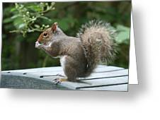 Visiting Squirrel Luncheon Greeting Card