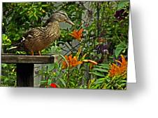 Visitor To The Feeder Greeting Card