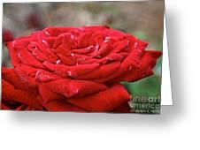 Viva Red Greeting Card