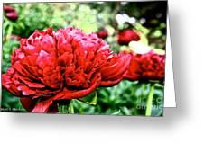 Vivid Peonies Greeting Card