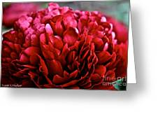 Vivid Red Greeting Card