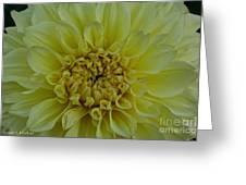 Vivid Yellow Dahlia Greeting Card