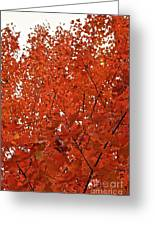 Vividly Sugar Maple Greeting Card