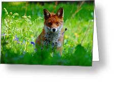 Vixen In Bluebells Greeting Card