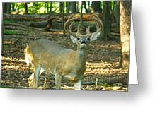 Vocal 10 Point 9544 4378 Greeting Card