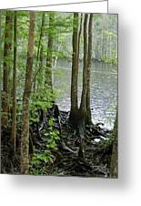 Waccamaw View II Greeting Card