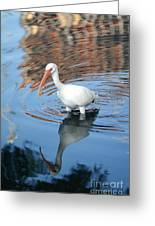 Waded Reflections Greeting Card