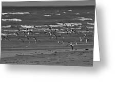 Wading Birds In Flight V4 Greeting Card