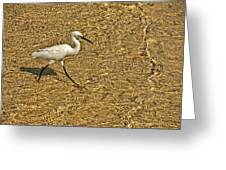 Wading For A Meal Greeting Card