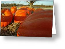 Wagon Ride For Pumpkins Greeting Card