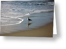 Waiting For Lunch On Shore Greeting Card