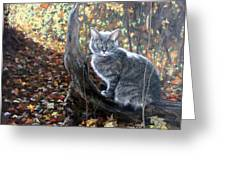 Waiting In The Woods Greeting Card by Sandra Chase