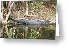 Wakulla Springs Alligator Greeting Card
