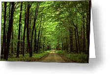 Walking Away Forest Path  Greeting Card