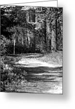 Walking In The Springtime Woods In Black And White Greeting Card