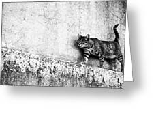 Walking On The Wall Greeting Card