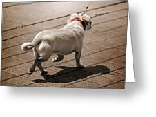 Walking The Dog Greeting Card by Steven  Michael