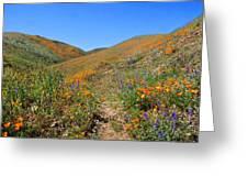 Walking Thru The Wildflowers Greeting Card